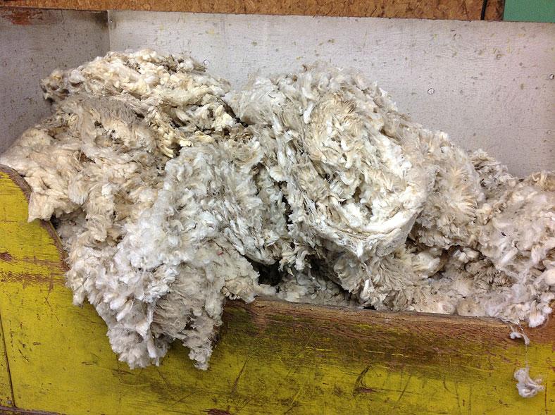 Bin of fine wool